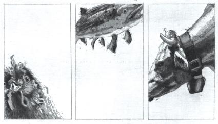 Vogel-Fisch-Fleisch