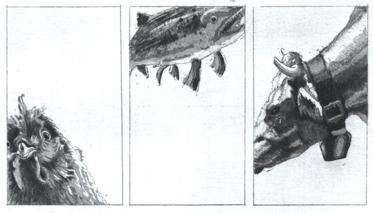 Fisch-Fleisch-Vogel