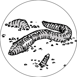 Regenwurm (ca. 2m)