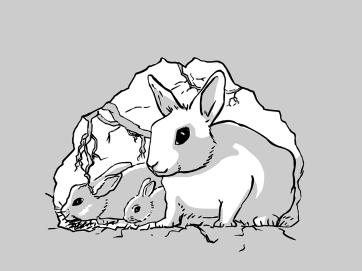 kaninchenbau