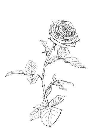 Ausmalbuch - Rose